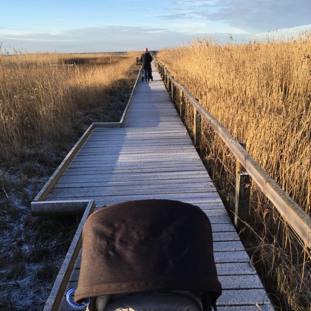 Vinterpromenad Bjärred